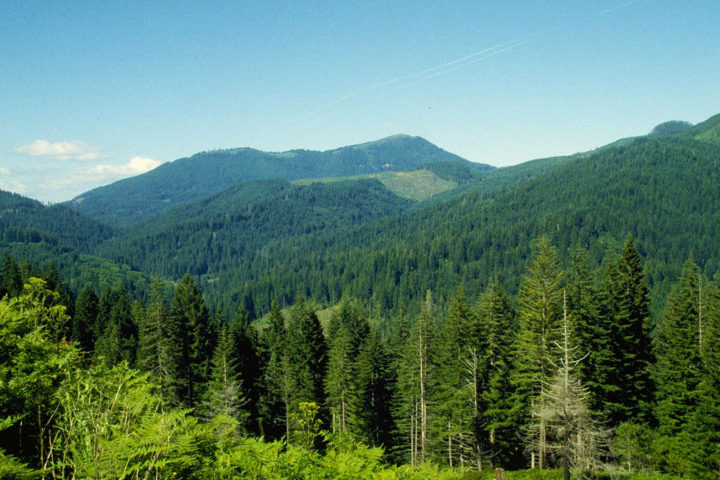 1024px-oregon_forestry_8433402010
